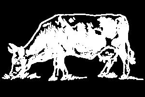 Mucca disegnata a tratto